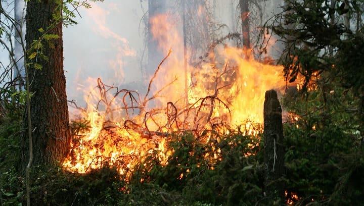 Возгорание в лесу