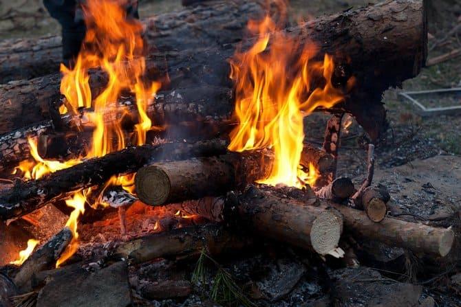 Проблем с дровами в лесу никогда не будет