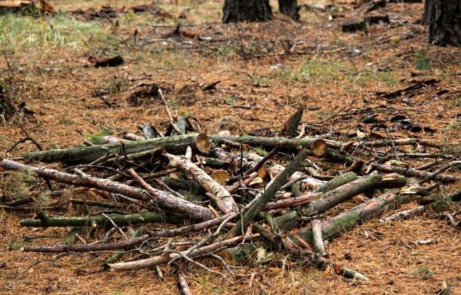 Хворост можно насобирать под деревьями