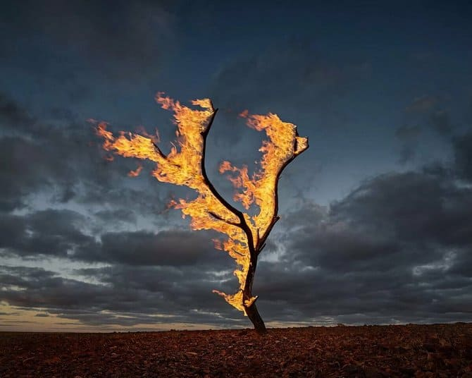 Важно, чтобы рядом не было других деревьев, которые могут загореться