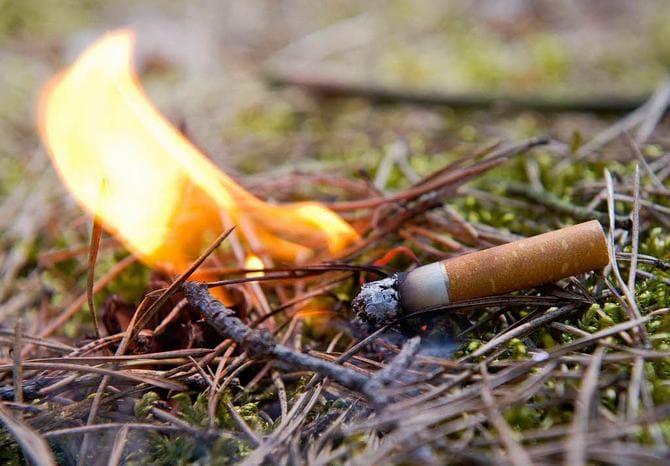 Кидать окурки в лесу строго запрещено
