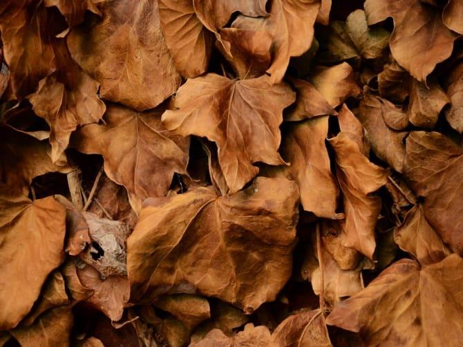 Сухие листья отлично подойдут для разведения огня
