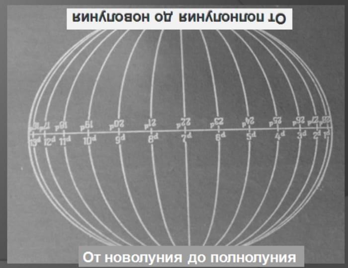 Количество этих «долек» пригодится при определении стороны света