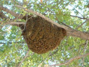 Пчелиное улье