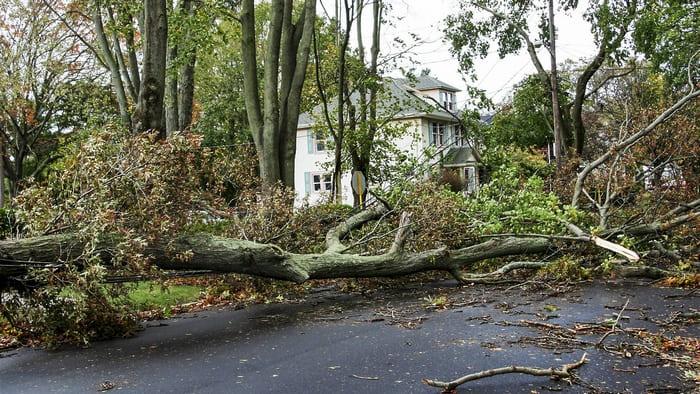 Нельзя находиться вблизи деревьев во время сильного ветра