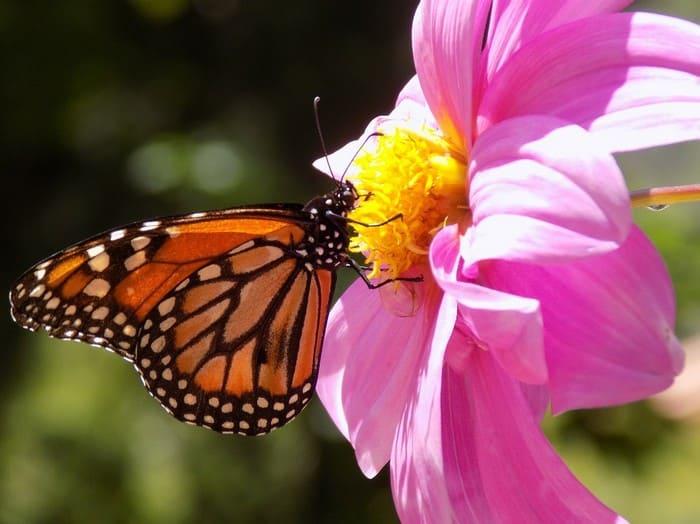 Сложенные крылья бабочки в разное время дня укажет стороны света