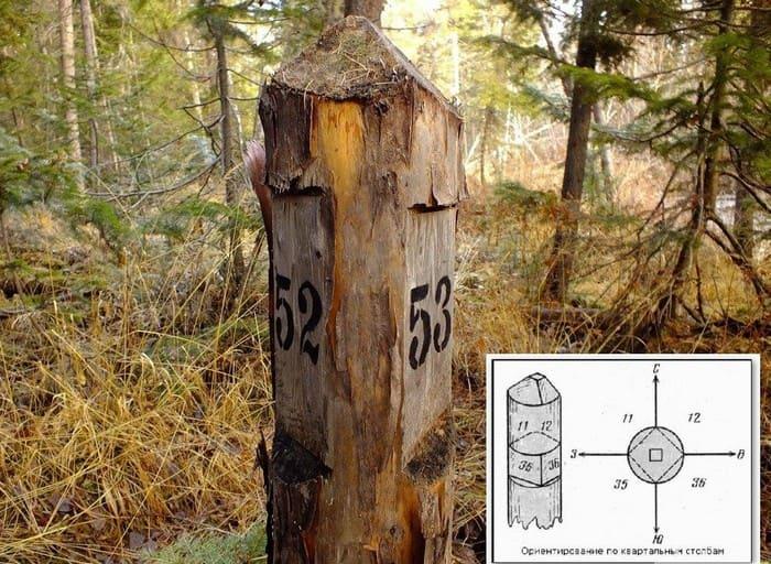 Ориентирование по квартальным столбам в лесу