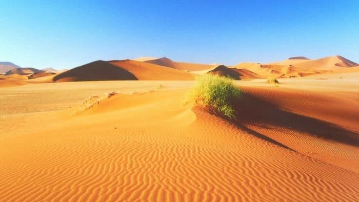 Редкие растения пустыни могут сослужить для ориентирования