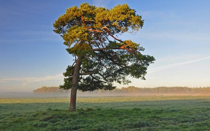 С южной стороны крона дерева густая