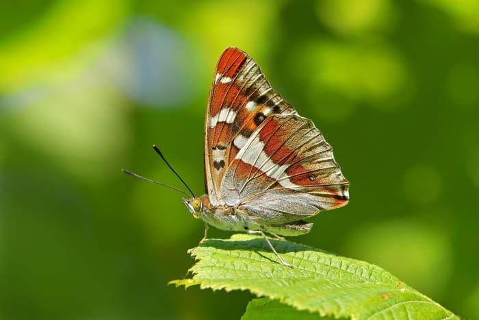 Утром крылья бабочки укажут на восток