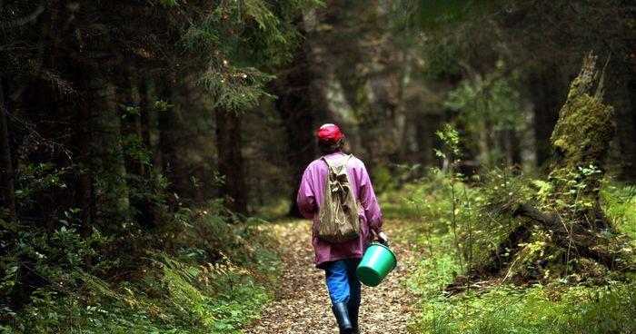 Лес - это место повышенной опасности