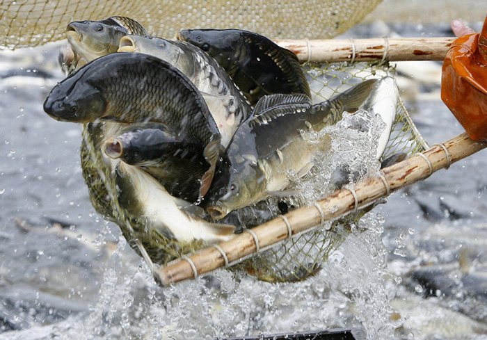 Ловушка позволяет долгое время сохранять улов живым
