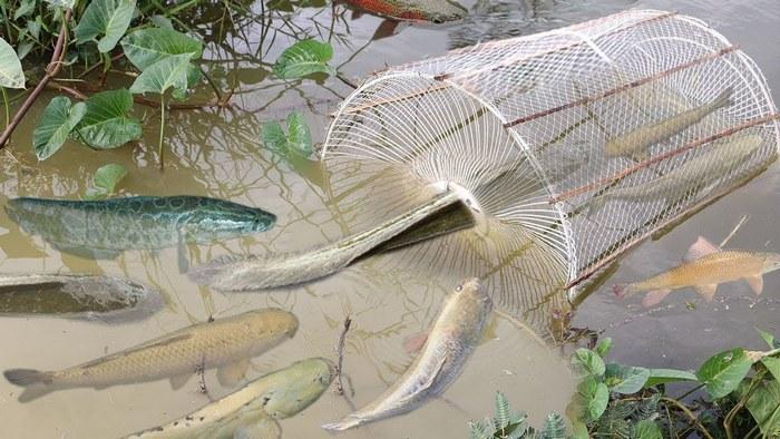 Ловушки для ловли рыбы на реке