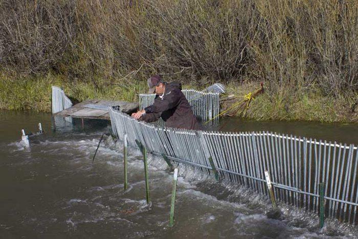 Ловушки с плотиной - более сложный вариант ловушки для рыб