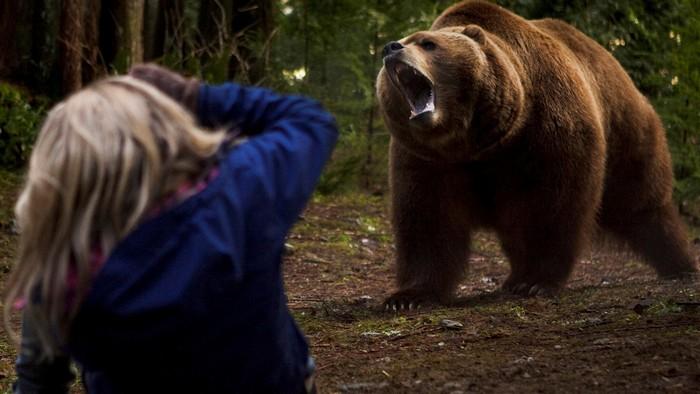 Не убегайте от зверя и не поворачивайтесь спиной