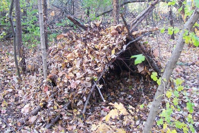 Убежище в лесу необходимо для выживания