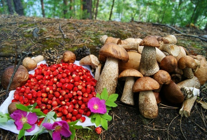 В лесу можно есть только хорошо знакомые растения