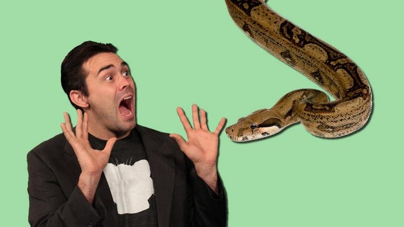 Боязнь змей – это естественная защитная реакция человеческого организма перед потенциальной опасностью