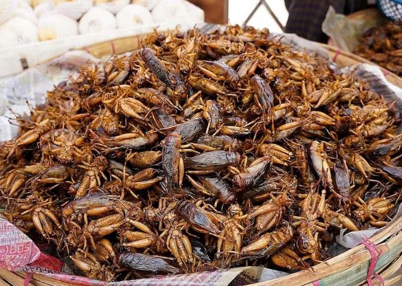 Многие насекомые обладают определенным вкусом, сравнимым с обычными продуктами