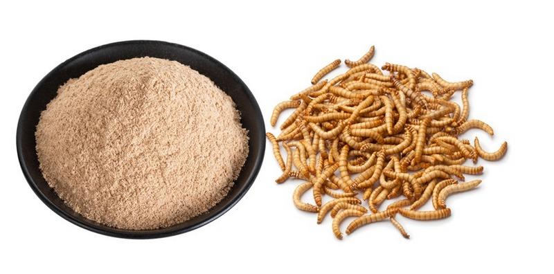 На основе съедобных насекомых изготавливают натуральные протеиновые добавки