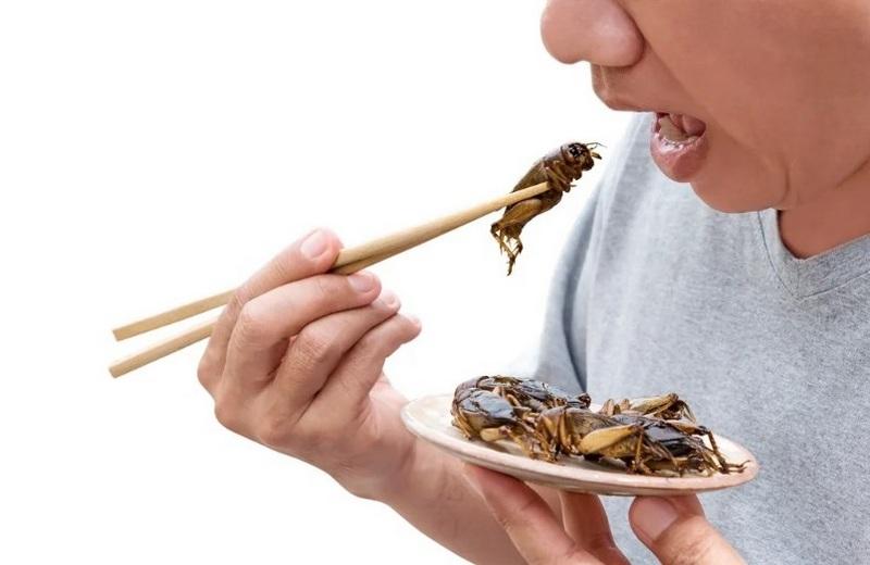 Насекомые - здоровая и безопасая альтернатива традиционному питанию