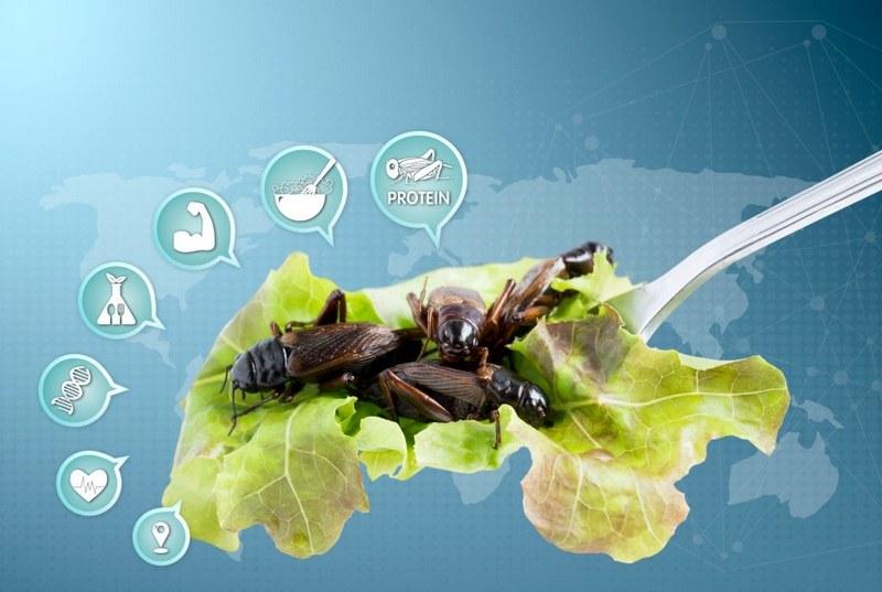 Поедание насекомых практикуется во многих странах мира Азиатско-Тихоокеанского региона