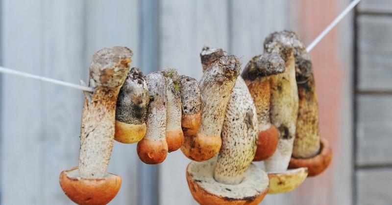 После сушки свойства ядовитых грибов могут измениться