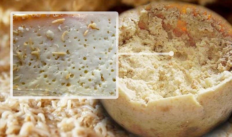 Сыр Casu marzu изготовлен из живых личинок сырной мухи