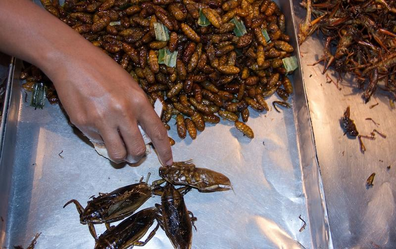 Тараканов употребляют в пищу в жареном виде