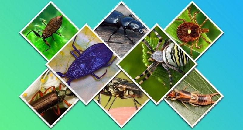 В России обитает множество ядовитых насекомых, способных нанести человеку серьезный вред