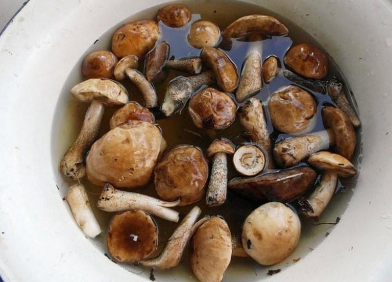 Все свежесобранные грибы следует вымачивать в воде перед приготовлением
