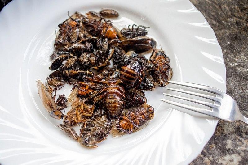 Жареные тараканы получаются сухими и хрустящими на вкус
