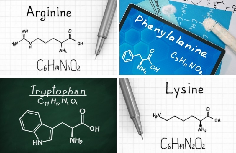 Аминокислоты, входящие в состав желудей