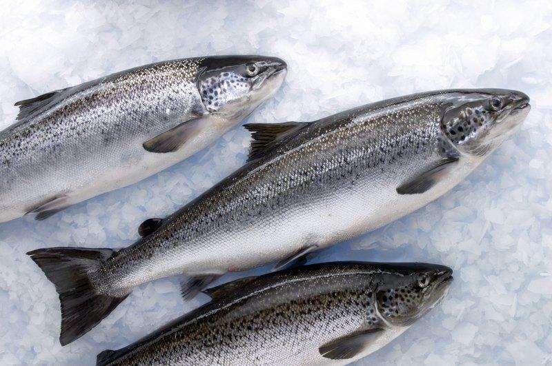 Для запекания на мангале берут свежевыловленную или мороженую рыбу
