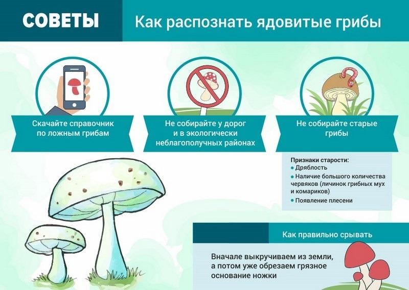 Характерные признаки ядовитых грибов