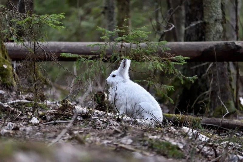 Лучше время для охоты на зайца на узерку — с середины до конца осени