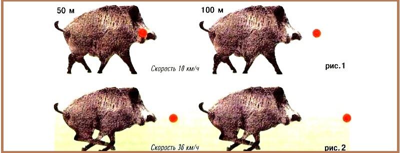 Общие правила расчета выстрела при беге животного со средней скоростью