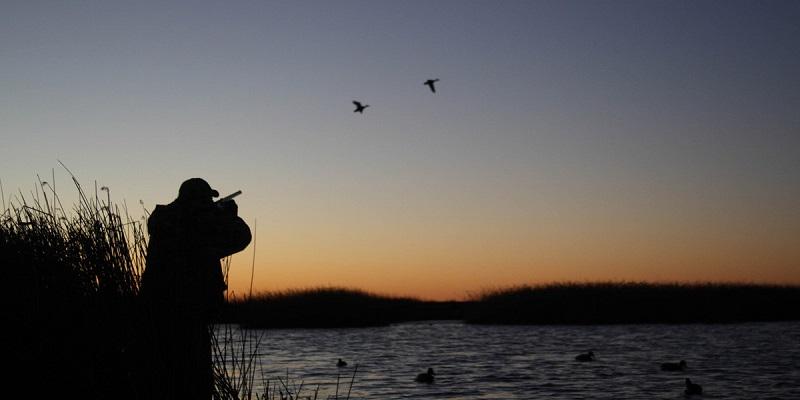 Охота на перелетах проводится вечером после захода солнца