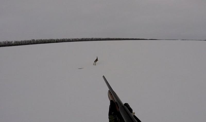 Охота на зайца по первому снегу является самым доступным и популярным видом