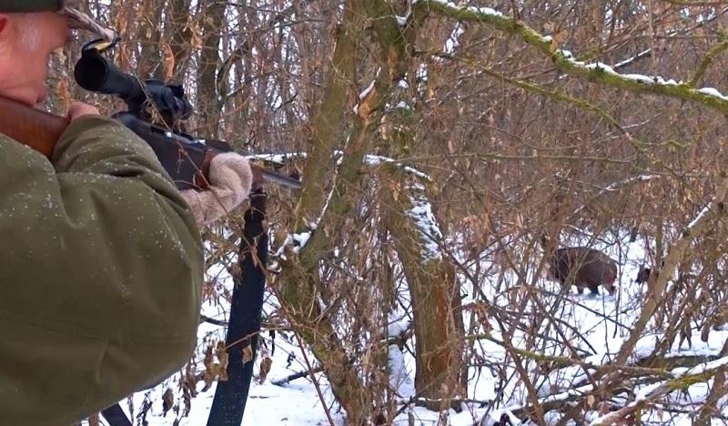 Охота с подхода - это один из наиболее часто используемых методов охоты на животных