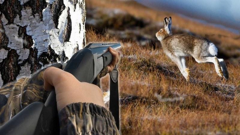 Охотиться на зайцев разрешается в период с середины сентября до конца марта
