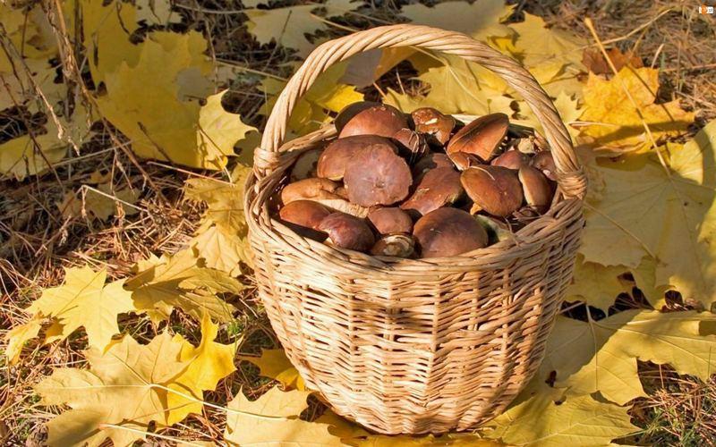 Осень - оптимальное время для сбора грибов