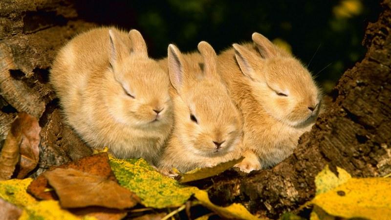 Осенние зайчата листопаднички