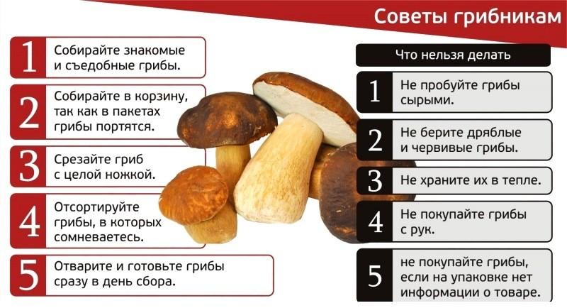Памятка по сбору грибов