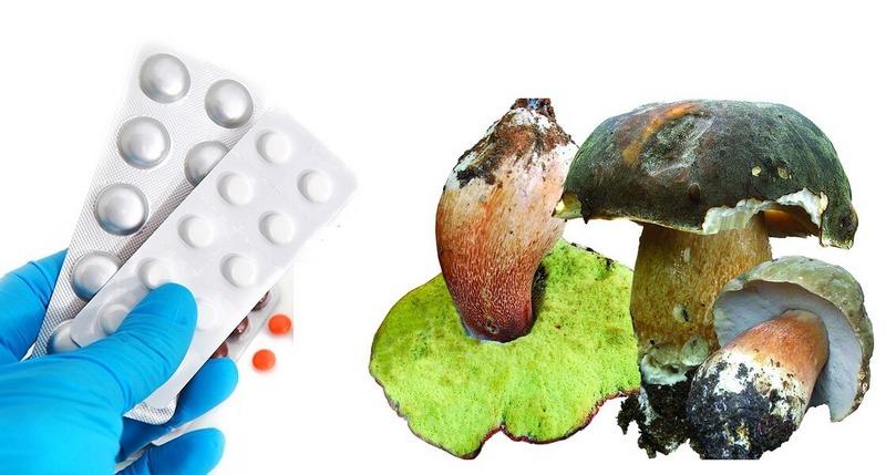 Полусъедобные грибы широко используют в медицине для лечения различных заболеваний