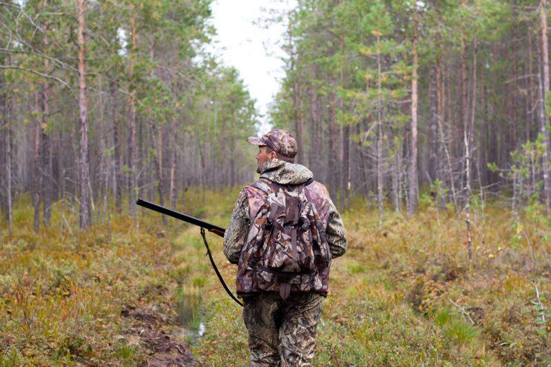 При выборе места для охоты следует убедиться, что поблизости не ведется добыча других зверей