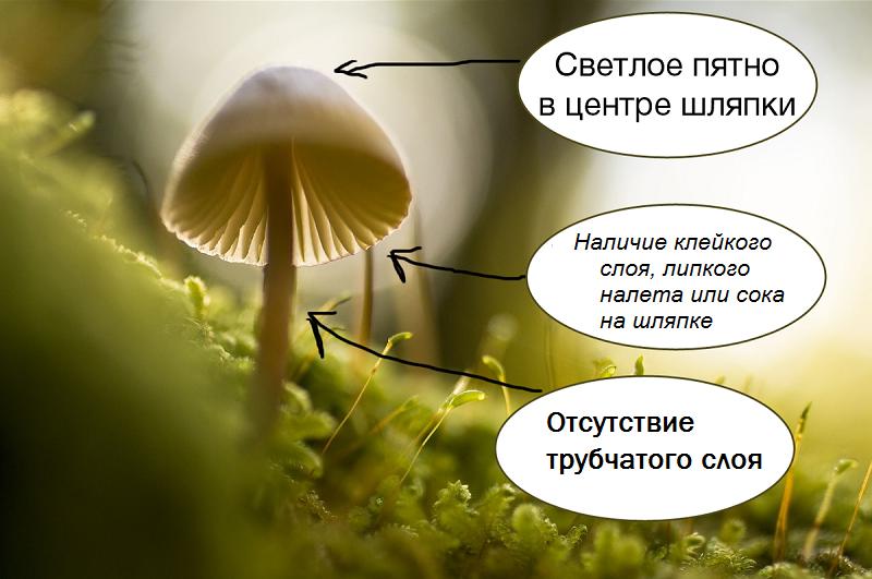 Признаки ядовитого гриба