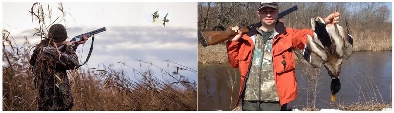 Сезон охоты на уток делится на два времени года: осень и весну