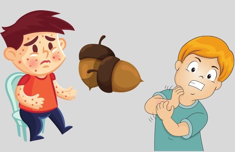 Употребление желудей может вызвать нежелательные аллергические реакции