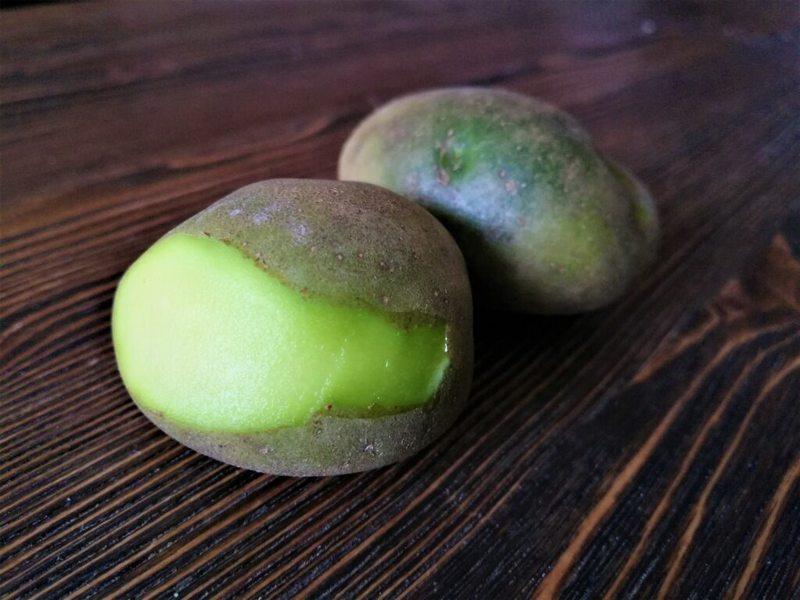 Употреблять позеленевший картофель в пищу нельзя